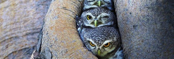beautiful_owl_photos_featured