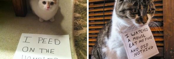 cat-shaming-fb