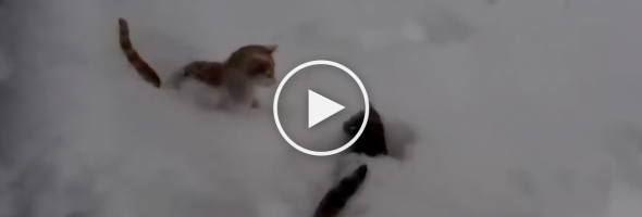 cats-having-fun-playing-in-snow