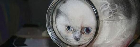 cats_are_liquids_02