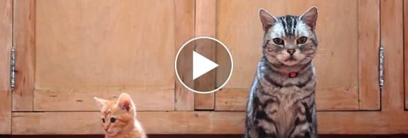 catsg_videos