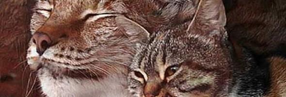covercat-lynx-bff-04-750x400