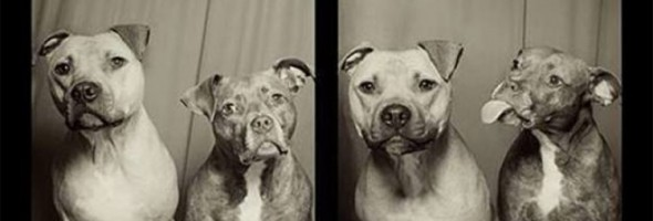 covero-PHOTO-BOOTH-DOGS-570-750x400 (1)