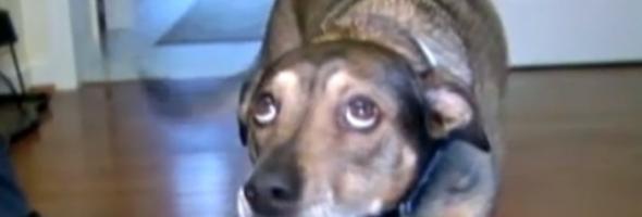dog-4