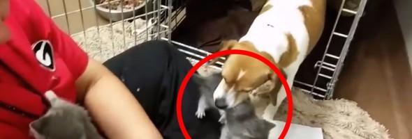 dog-mom