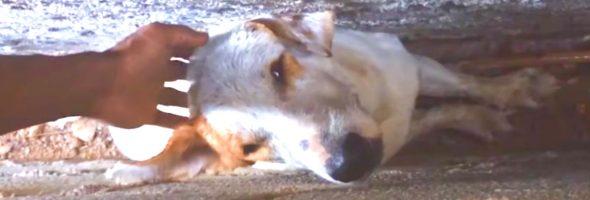 dog-stuck-walls-rescue