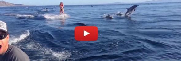 dolphin-surfing