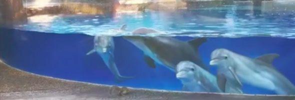 dolphins-watch-squirrel