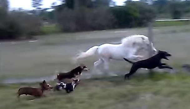 doxies-horse