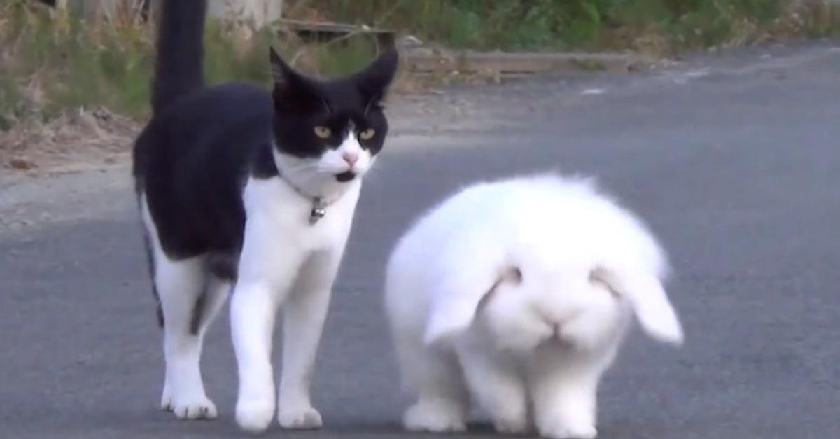 fluffybunny-cat-copy
