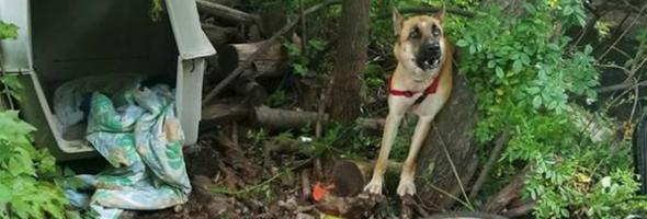 genesis-woods-rescue