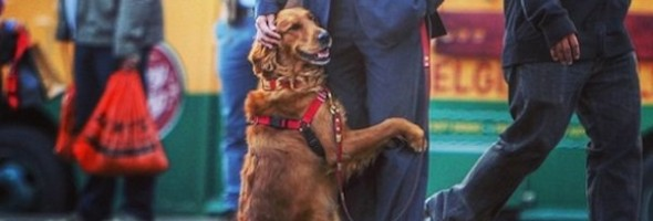 huggy-dog
