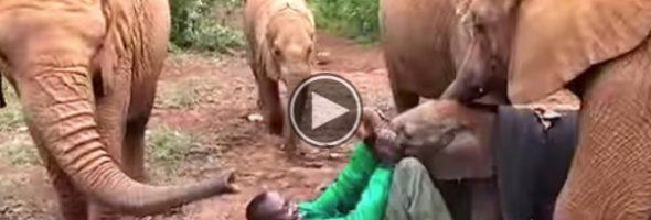 kithaka-rescue-elephant
