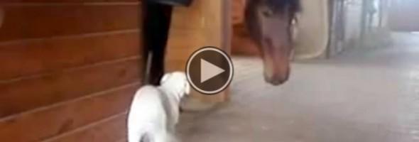 puppyhorselove