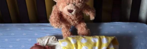 teddy_baby