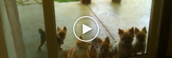 these-dogst-the-cat-does-next-wow