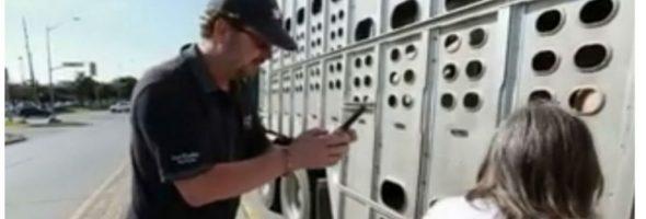 toronto-pig-save-trial-3-