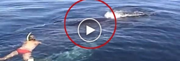 whalie1