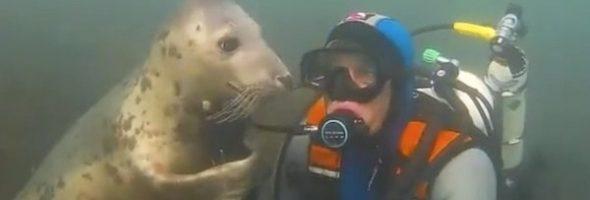 1603067262-5439-seal-diver-2