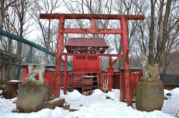 1606003563-5411-Kitsune-mura-shrine-H26Dec13