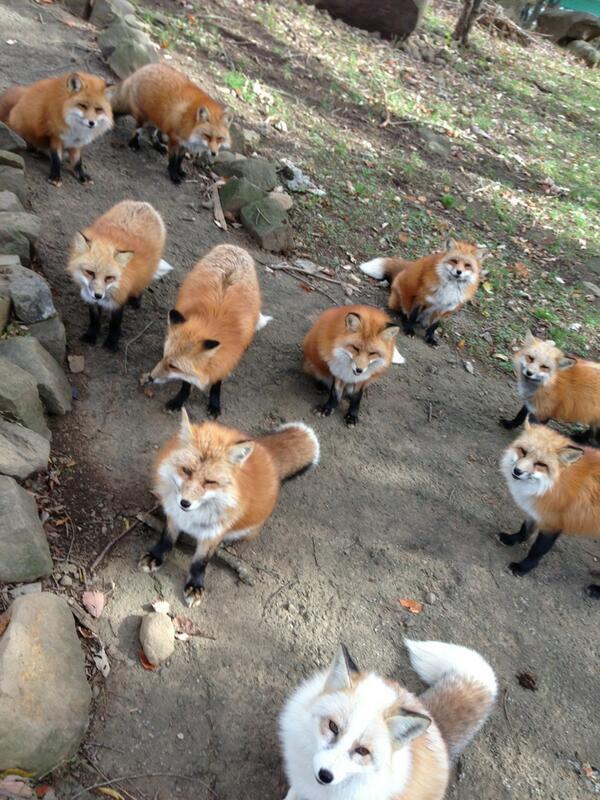 1606003563-6579-fox-village