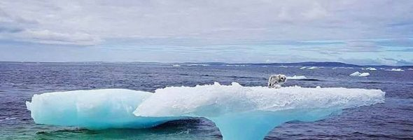 1611623404-1840-arctic-fox-rescue-3
