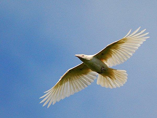 1614132055-1088-white-raven-9
