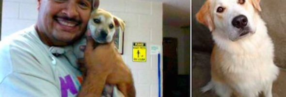 1618874476-1179-dogs-at-texas-shelter