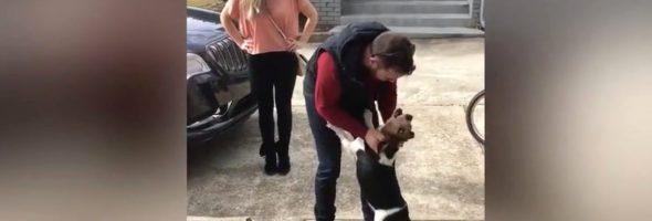 beagle-reunion