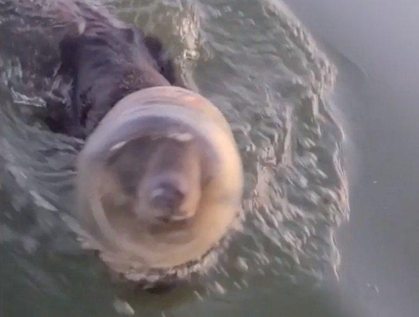bear-cheesies-rescue-1
