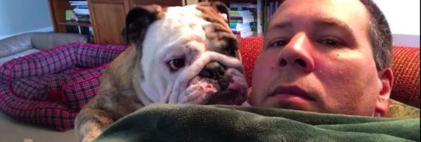 bulldog-tantrum