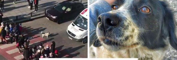 dog-street-guard-children-georgia-fb74