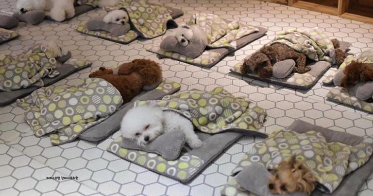 dogs-napping-neneverlose