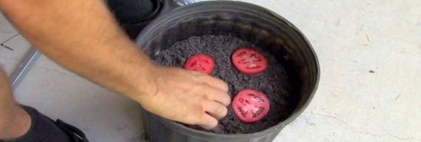 easy_way_to_grow_tomato_s