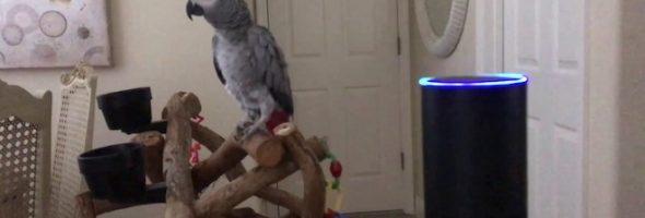 parrot-alexa