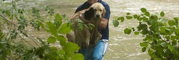 rescued-dog