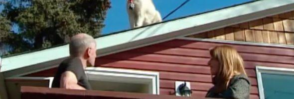 roof-dog-2