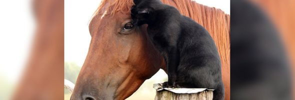 shy-cat-and-horse-are-best-friends-cover