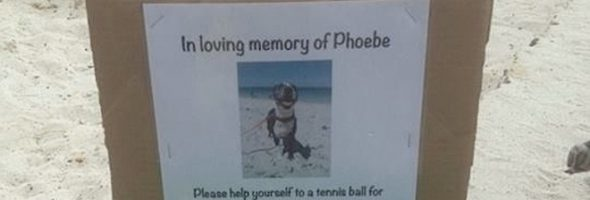 tennis-balls_phoebe