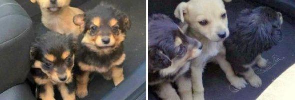 three-puppies-road