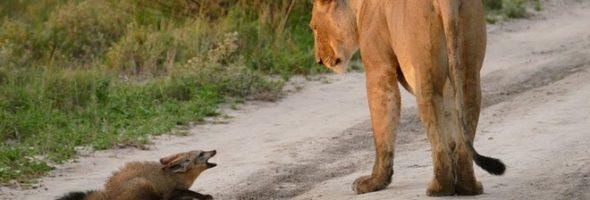 wildlife-botswana